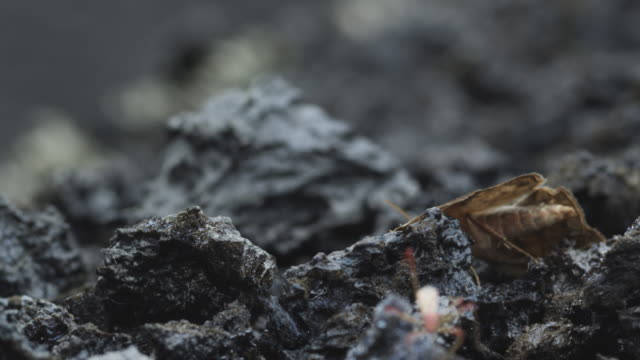 Insect crawling on rock, El Herrio, Canaries, 2011