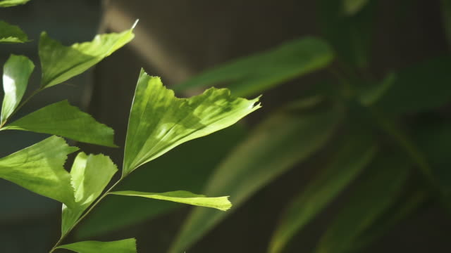 insect eaten leaves close-up with copy space - eaten stock videos & royalty-free footage