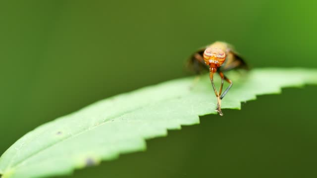Insect grooming on green leaf.