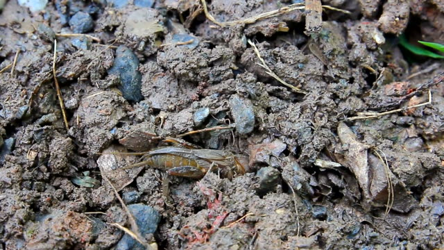 insect is dug into the dirt - dugout stock videos & royalty-free footage