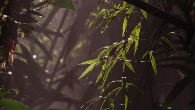 insect lands in misty bamboo forest, thailand - bamboo plant stock videos and b-roll footage