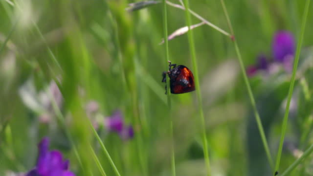 Insect life in Lake Neusiedl
