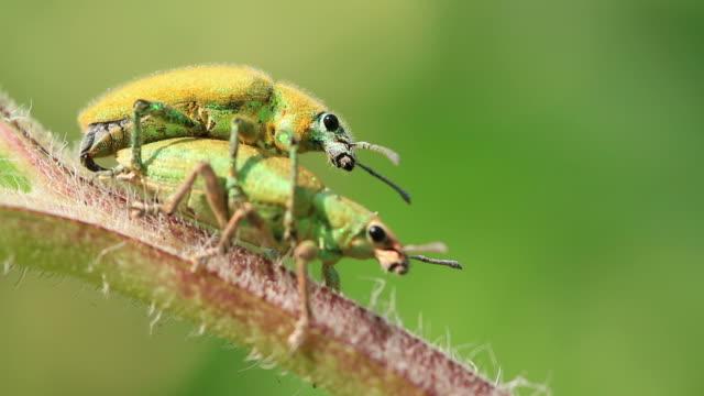Insekt Sich paaren