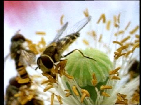 vídeos de stock, filmes e b-roll de cu insect on flower head - invertebrado