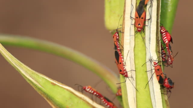 insect - medium group of animals stock videos & royalty-free footage