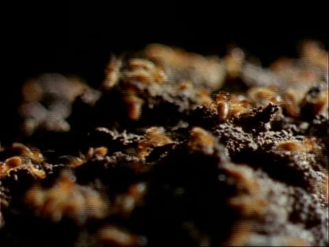 vídeos y material grabado en eventos de stock de insects crawl over mounds of dirt. - artrópodo