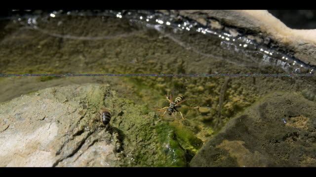 insects drinking water - cartilage stock videos & royalty-free footage