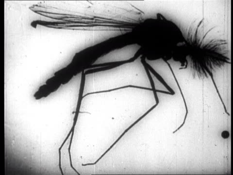insects dropped by american planes are inspected by chinese specialists - insect stock videos & royalty-free footage