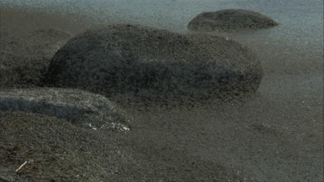 insects fly around rocks on a shoreline. - 虫の群れ点の映像素材/bロール