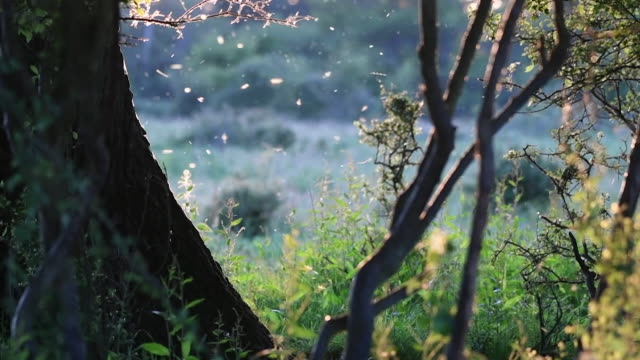 insects flying around tree in rural west sussex, in soft afternoon sunshine - tree stock videos & royalty-free footage