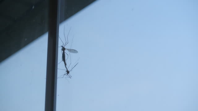 stockvideo's en b-roll-footage met insects mating outside the window - mug