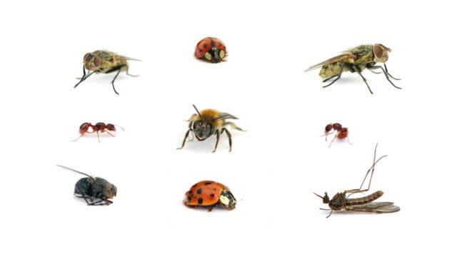 vídeos y material grabado en eventos de stock de insectos - mariquita