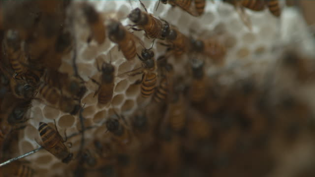 inside a bee hive - 40 seconds or greater stock videos & royalty-free footage