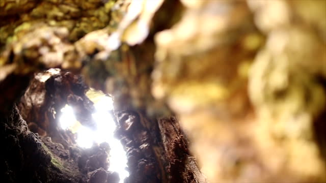 inside a hollow tree - oak stock videos and b-roll footage