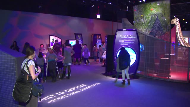 inside a new interactive biomechanics exhibit at the field museum on march 10, 2014 in chicago, illinois. - zoology stock videos & royalty-free footage