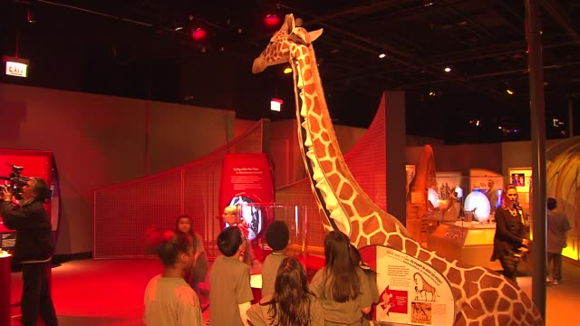 inside a new interactive biomechanics exhibit at the field museum on march 10, 2014 in chicago, illinois. - zoologia video stock e b–roll