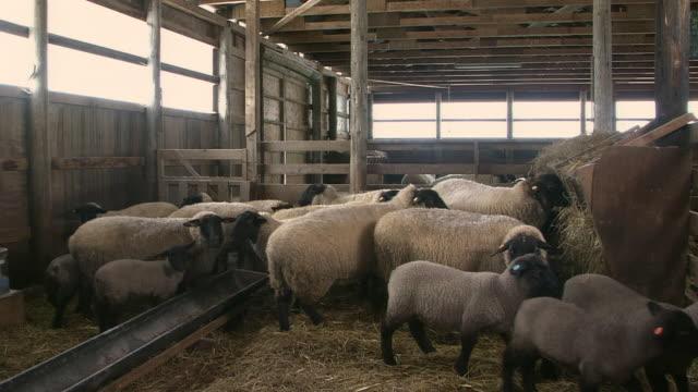 inside a sheepfold - 家畜点の映像素材/bロール