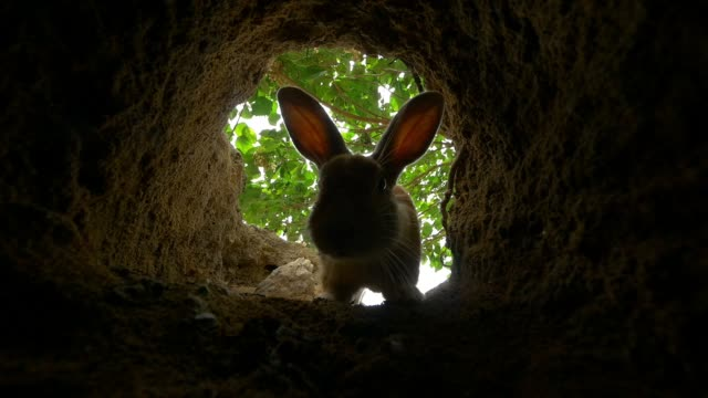 slomo inside burrow as feral domestic rabbit enters - loch stock-videos und b-roll-filmmaterial