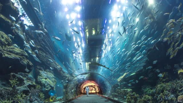 inside dubai aqurium - aquarium stock videos & royalty-free footage