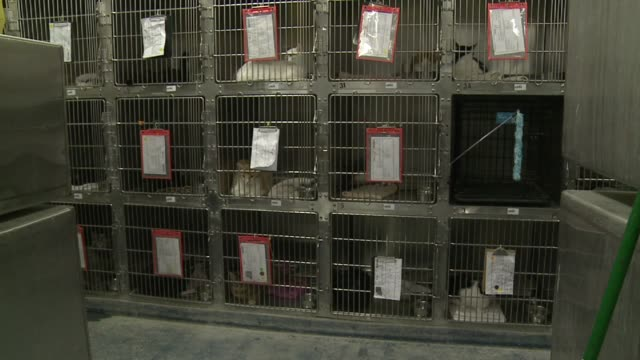 Inside Indianapolis Animal Care and Control Group Of Cats In Kennels At Animal Control on October 09 2013 in Indianapolis Indiana