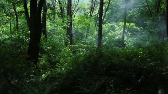 inside of jirisan mountain forest / gyeongsangnam-do, south korea - steam stock videos & royalty-free footage