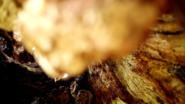 inside of the one thousand years old oak tree - plant bark stock videos and b-roll footage