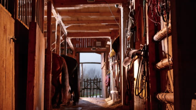 ds inside the horse's stable in sunshine - barn stock videos & royalty-free footage