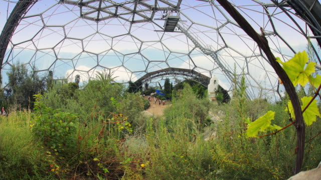stockvideo's en b-roll-footage met t/l inside the temperate house at the eden project / st. austell, england, united kingdom - breedbeeldformaat