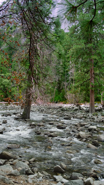 inside yosemite - alder tree stock videos & royalty-free footage