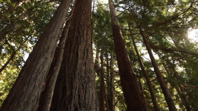 Inspiration in a Redwood Grove