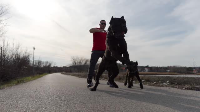 instruktor für hundeverhalten hält einen starken wachhund für eine leine - haustierleine stock-videos und b-roll-filmmaterial