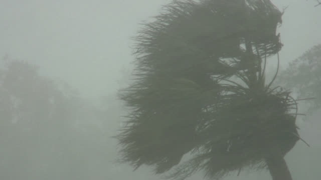 Intense winds blowing a palm tree during hurricane.