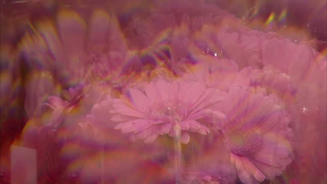 stockvideo's en b-roll-footage met interior closeup shots of cut flowers for sale at new covent garden flower market>> on november 22 2014 in london england - for sale korte frase