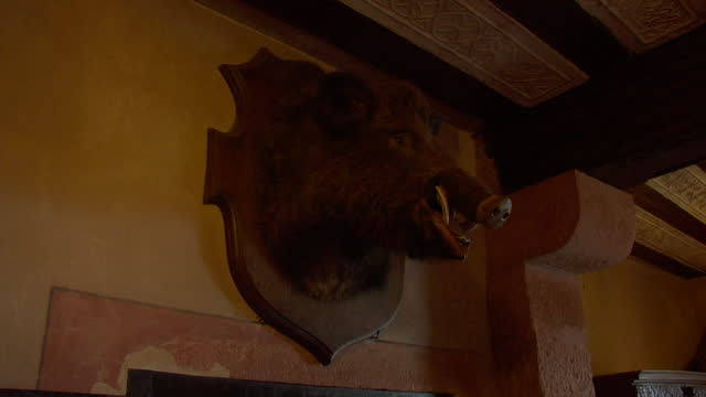 interior decor of a medieval castle banquet hall featuring a taxidermy mounted stuffed boar's head. - banquet hall stock videos & royalty-free footage