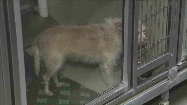 KTXL Interior of Animal Shelter in Sacramento
