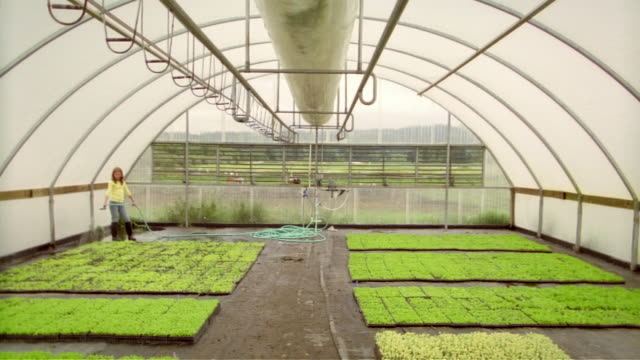 vídeos de stock e filmes b-roll de interior of greenhouse with girl watering crops in background / dolly back as woman enters frame carrying tray of seedlings toward camera - alface