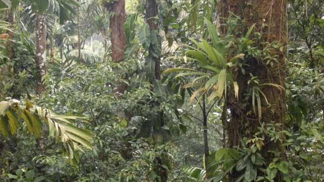 interior of tropical rainforest, ecuador,  during an afternoon shower with rain and mist - ecuador stock videos and b-roll footage