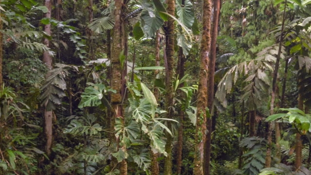 Interior of tropical rainforest in the Ecuadorian Amazon on a humid day