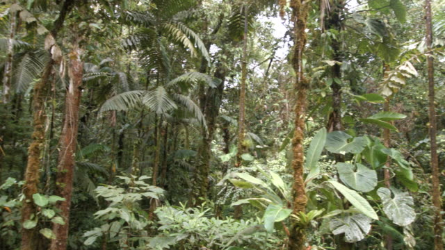 interior of tropical rainforest in the ecuadorian amazon - tropical tree stock videos & royalty-free footage