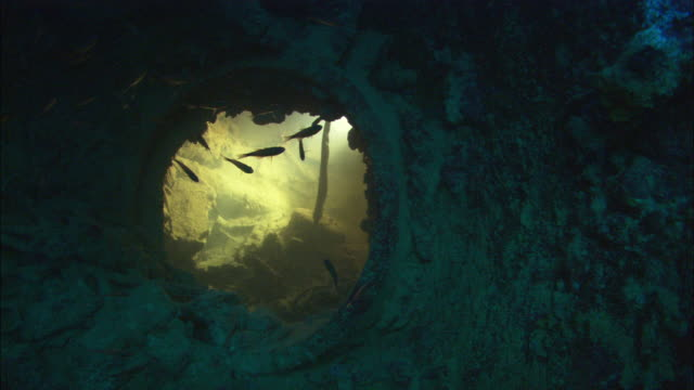 stockvideo's en b-roll-footage met interior point of view looking into room below hatch, chuuk lagoon, south pacific  - hatch