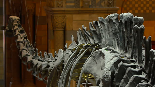 Interior shots final day of Dippy the dinosaur on display in the Hintze Hall of the Natural History Museum with visitors walking around on January 04...