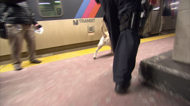 interior shots of a police dog handler patrolling a platform at pennsylvania station with a labrador sniffer dog>> on february 02 2014 in new york... - beruflicher umgang mit tieren stock-videos und b-roll-filmmaterial