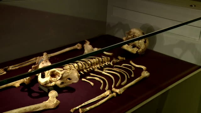 stockvideo's en b-roll-footage met interior shots of a replica of the fossil skeleton of a man from the mesolithic era known as 'cheddar man' on display in the natural history museum>>... - prehistorische mens