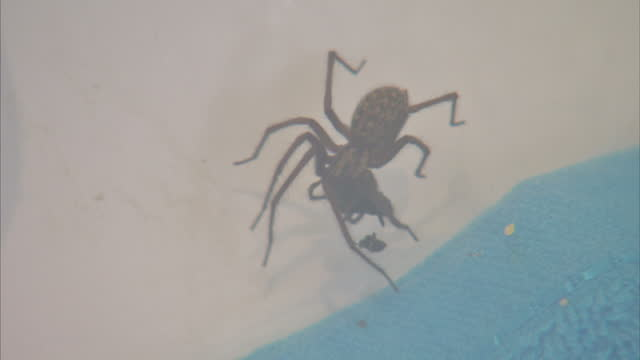interior shots of a spider inside a bath tub on september 24 2015 in london england - arachnophobia stock videos and b-roll footage