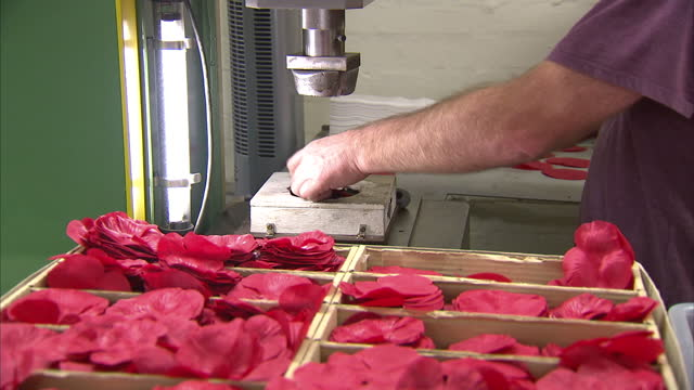 interior shots of an anonymous worker crimping fabric shapes in a press to make poppy decorations at the royal british legion poppy factory the royal... - crimped hair stock videos and b-roll footage