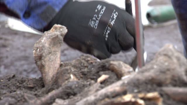 interior shots of archaeologists from museum of london archaeology excavating human remains from a 16th century burial site discovered during... - archaeology stock videos & royalty-free footage