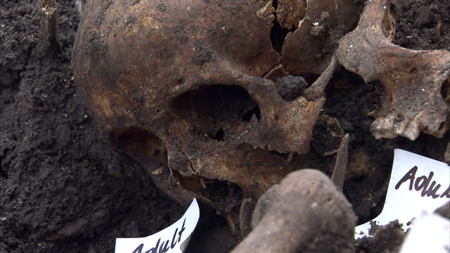interior shots of archaeologists from museum of london archaeology excavating human remains from a 16th century burial ground discovered during... - archaeologist stock videos & royalty-free footage