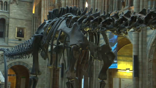 vídeos y material grabado en eventos de stock de interior shots of dippy the diplodocus dinosaur replica skeleton in the victoria hintze hall in the natural history museum on january 29 2015 in... - museo de historia natural museo