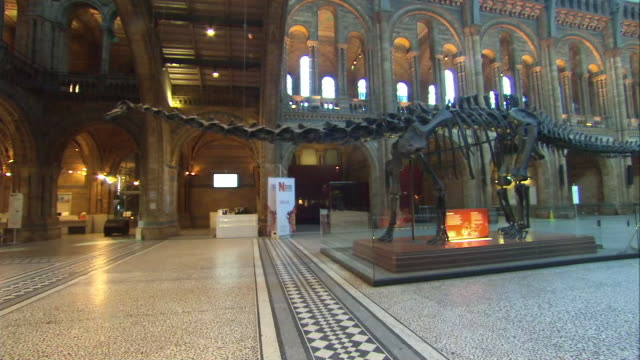interior shots of dippy the diplodocus dinosaur skeleton at the natural history museum on 29 january 2015 in london, united kingdom. - animal skeleton stock videos & royalty-free footage