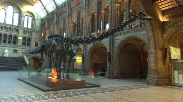 interior shots of dippy the diplodocus dinosaur skeleton at the natural history museum on 29 january 2015 in london united kingdom - tierisches skelett stock-videos und b-roll-filmmaterial